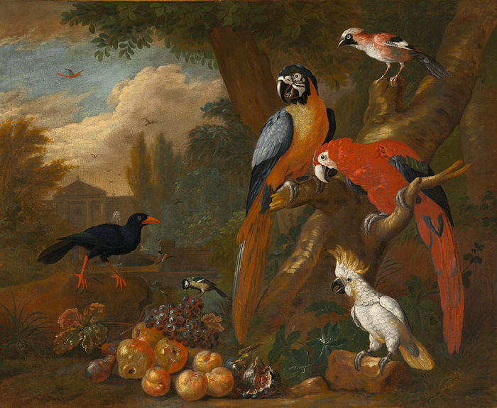 Bogdány Jakab: Két arara, kakadu és szajkó gyümölcsökkel (1710 körül)